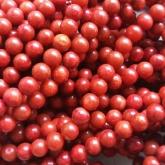 Punane korall 8 mm (segatud resiniga)