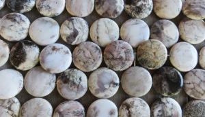 Valge ahhaat (White Crazy Agate) 30-40 mm